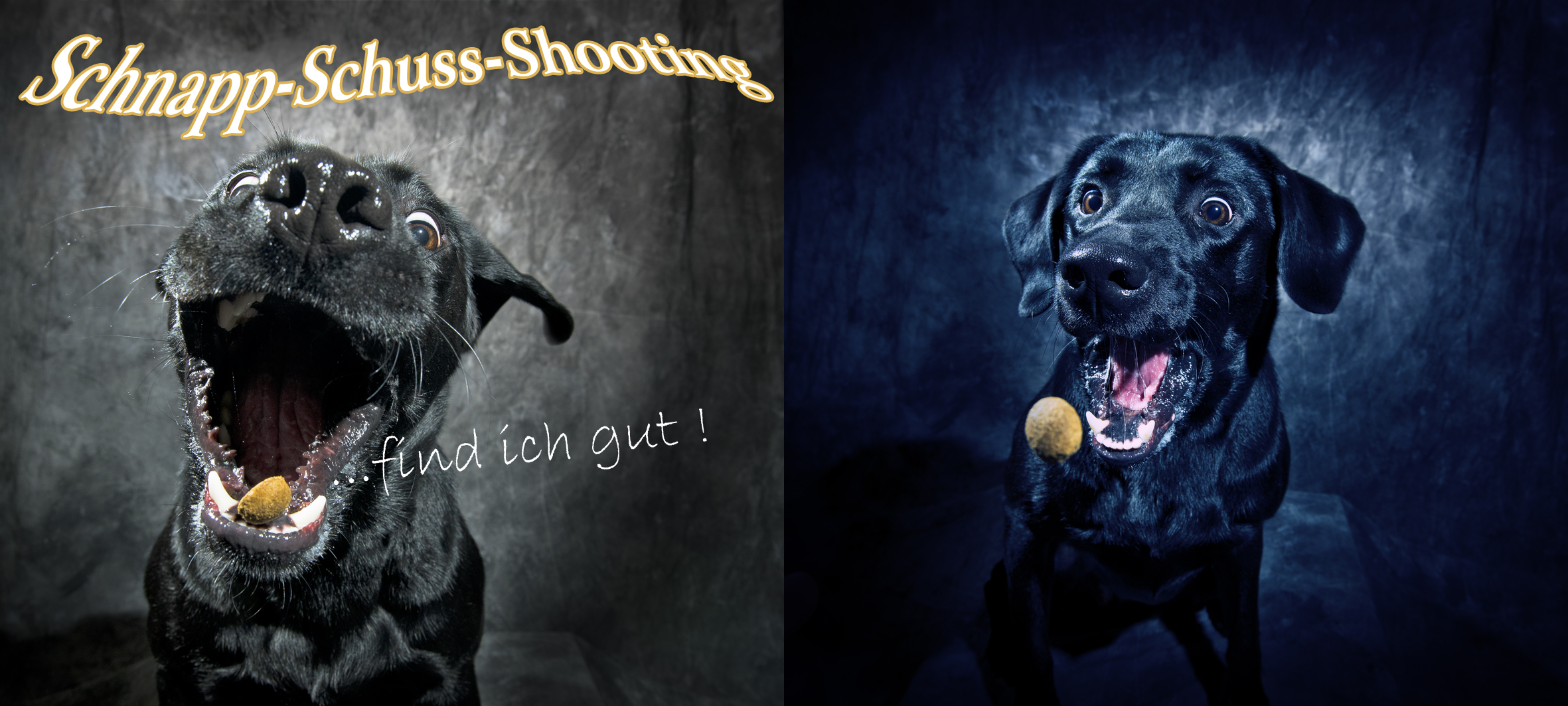 Pferde & Hundefotografie