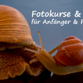 Fotokurse & Workshops